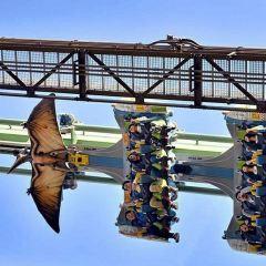 더 플라잉 다이너소어 여행 사진