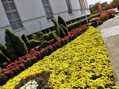 菊花博覽園