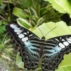Phuket Botanic Garden User Photo