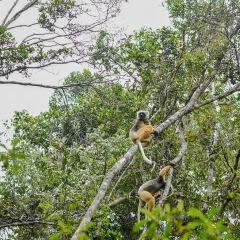 Andasibe-Mantadia National Park User Photo