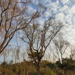 영곡 풍경명승구 여행 사진