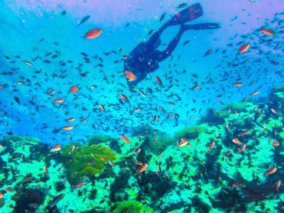 Ko Tao Deep Diving