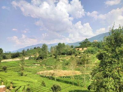 The Xixiang Tea Garden