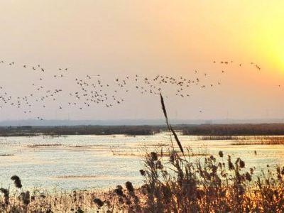 Sihong Hongze Lake Wetland