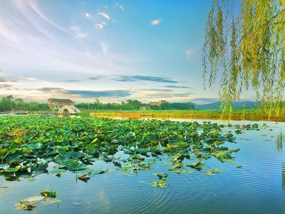 Ten Miles Lotus Pond