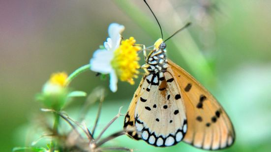 Bangkok Butterfly Garden and Insectarium