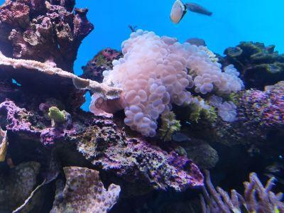 帕勞水族館