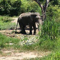 霍特薩丁大象基金會3