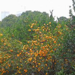 Orange Island User Photo