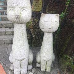貓空用戶圖片