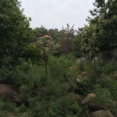 Qishan Forest Park User Photo