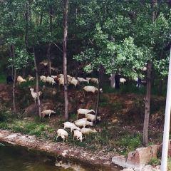 神牛穀景區用戶圖片