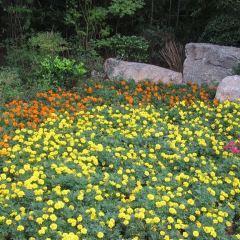 泉山森林公園用戶圖片