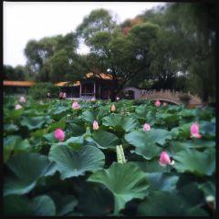 湖濱公園用戶圖片