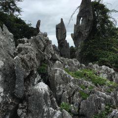 Guaishi Forest User Photo