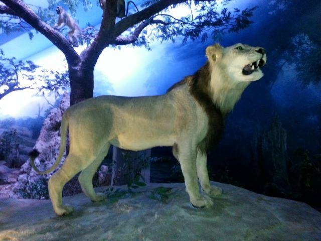 Tianjin Natural History Museum