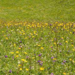 菊花台のユーザー投稿写真