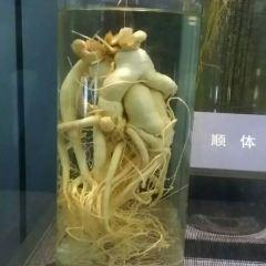 China Ginseng Museum User Photo