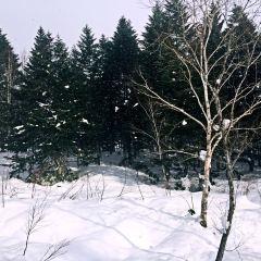 山莊滑雪場用戶圖片