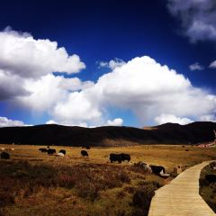 Nian Bao Yu Ze User Photo