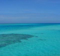 Zengmu Reef User Photo