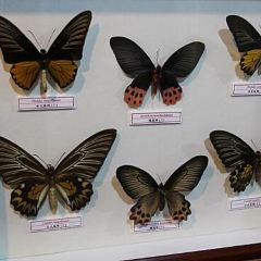 Taiwan Insect Museum User Photo