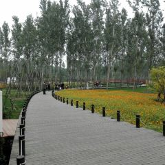 Xizhifang Yellow River Ancient Town User Photo