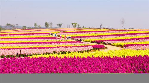 Tianhan Silk Road Ocean of Flowers