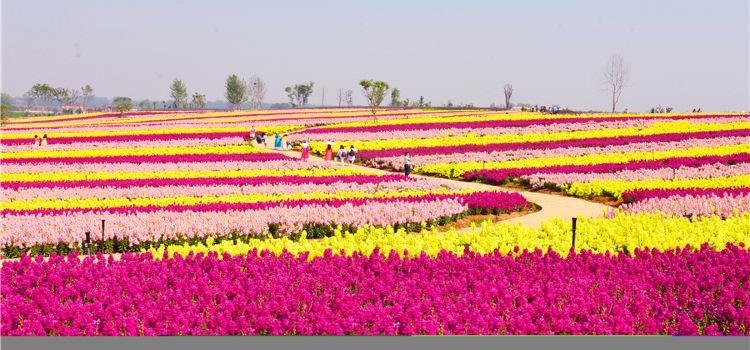 Tianhan Silk Road Ocean of Flowers1