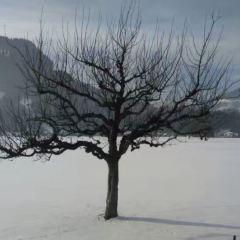 Schilthorn User Photo