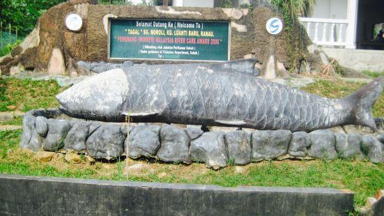 Sungai Moroli Fish Massage