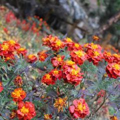 수이롄 협곡 경관지구 여행 사진