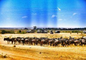 【冬行漫記】此生,一定要去非洲做一次探索者(肯亞+坦尚尼亞12天11晚)