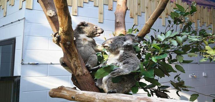 紅山森林動物園2