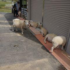 神戶市立六甲山牧場用戶圖片