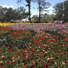 Australian National Botanic Gardens User Photo