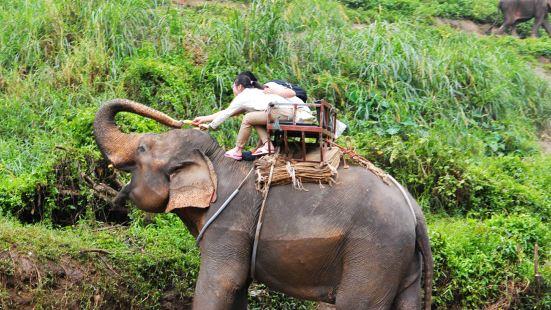 Maetaman Elephant Camp