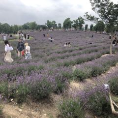 Momchilovtsi Herb Garden User Photo