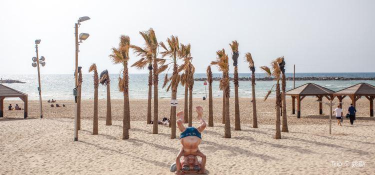 Frishman Beach2