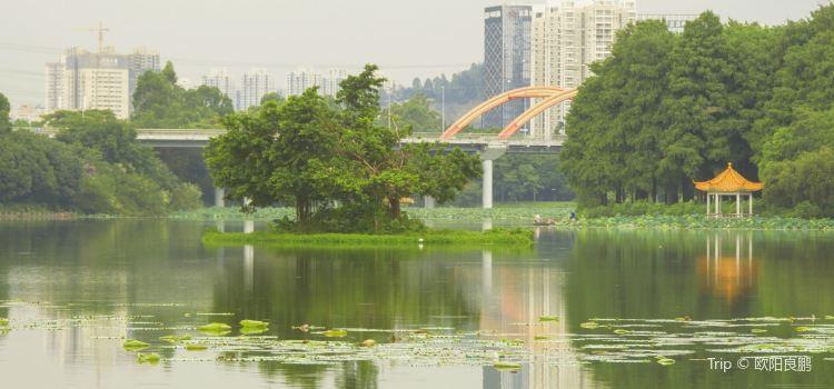 Honghu Park1