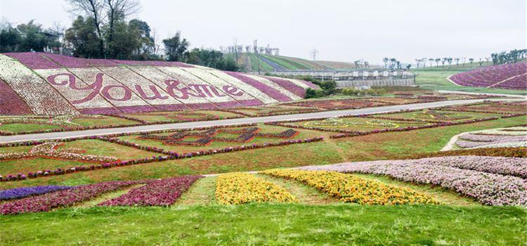 Xinglong Sea of Flowers2