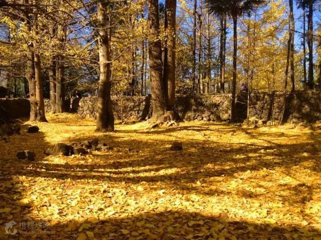這5個地方,我勸你在秋天不要太黃!