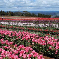 Emu Valley Rhododendron Garden用戶圖片