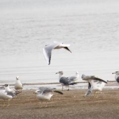 Guanniao Wetland User Photo