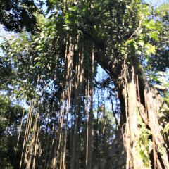 Hainan Baihualing Rainforest Cultural Tourism Zoneのユーザー投稿写真