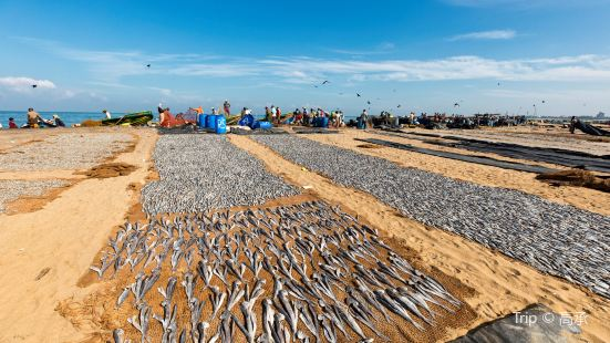 Negombo Central Fish Market