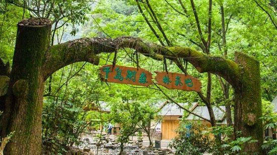 千島湖森林氧吧