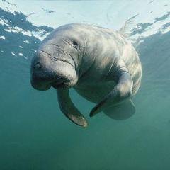 永泰歐樂堡海洋世界用戶圖片