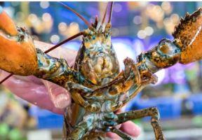 0加工費,0低消的海鮮漁場,兩位數吃波龍宴!