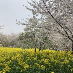 蘇州上方山國家森林公園用戶圖片